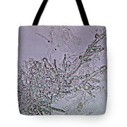 Lm Of Candida Albicans Tote Bag