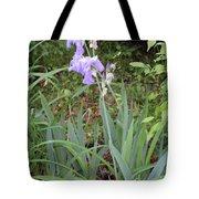 Lonely Gladiola Tote Bag