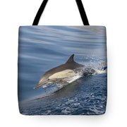 Long-beaked Common Dolphin Delphinus Tote Bag