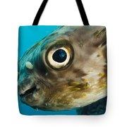 Long-spine Porcupinefish Diodon Tote Bag