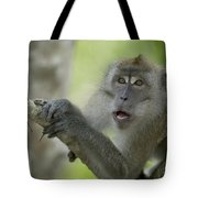 Long-tailed Macaque Macaca Fascicularis Tote Bag