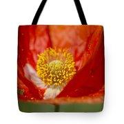 Longhorned Grasshopper Nymph On Orange Poppy Tote Bag