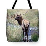 Looking Back Bull Tote Bag