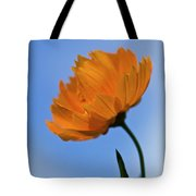 Looking Sideways Tote Bag