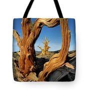 Looking Through A Bristlecone Pine Tote Bag