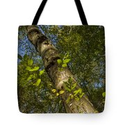Looking Up At A Tree Trunk Tote Bag