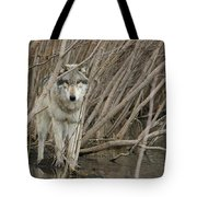 Looking Wild Tote Bag