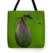 Lotus Bud And Blue Dasher Dragonfly Dl007 Tote Bag by Gerry Gantt