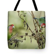 Lovebirds At Play  Tote Bag