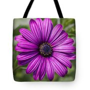 Lovely African Daisy - Osteospermum Tote Bag