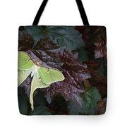 Luna Moth 1 Tote Bag