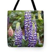 Lupine Lupinus Sp Flowers Tote Bag