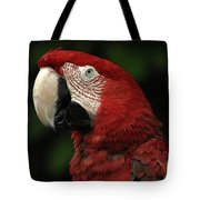 Macaw In Red Tote Bag