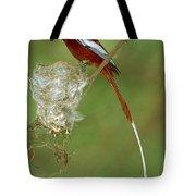 Madagascar Paradise Flycatcher Tote Bag