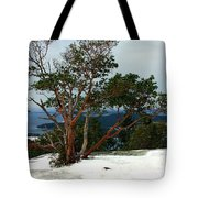 Madrone On Young Hill Tote Bag