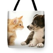 Maine Coon Kitten And Mongrel Dog Tote Bag