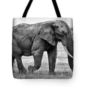 Majestic African Elephant Tote Bag