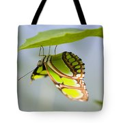 Malachite Butterfly On Leaf Tote Bag