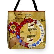 Malaria Parasite Life Cycle Tote Bag by Science Source