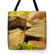 Male American Redstart On The Rocks Tote Bag