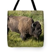 Male Bison Grazing  Tote Bag