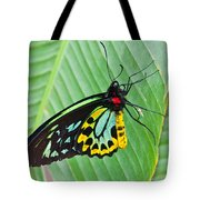 Male Cairns-birdwing Butterfly Tote Bag