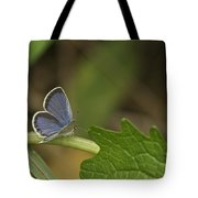 Male Eastern Tailed Blue Butterfly 3063 Tote Bag
