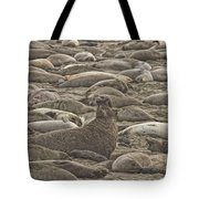 Male Elephant Seal Barking Amidst Tote Bag