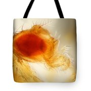 Male Fruit Fly Tote Bag