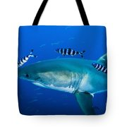 Male Great White Shark And Pilot Fish Tote Bag