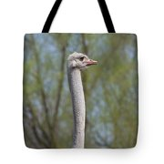 Male Ostrich Tote Bag