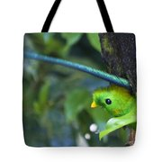 Male Quetzal Working On Nest Hole Tote Bag