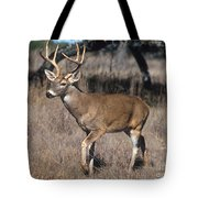 Male White-tailed Deer Tote Bag