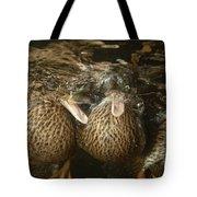 Mallard Ducks Underwater Tote Bag