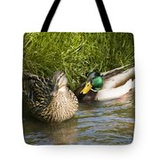 Mallards Nesting Tote Bag