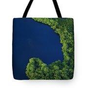 Mangrove Rhizophoraceae Stand, Bocas Tote Bag