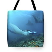 Manta Rays, Komodo, Indonesia Tote Bag