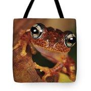 Mantellid Frog Boophis Tephraeomystax Tote Bag
