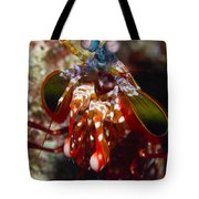 Mantis Shrimp, Australia Tote Bag