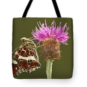 Map Butterfly Araschnia Levana Tote Bag