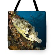 Map Pufferfish, Indonesia Tote Bag
