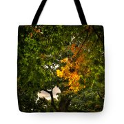 Maple In Oak Grove Tote Bag