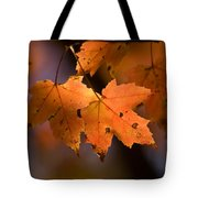 Maple Leaves In The Fall In Middlebury Tote Bag