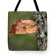 Maple Spanworm Moth Tote Bag