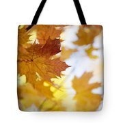 Maple Tree In Autumn Tote Bag