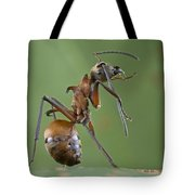 Marauder Ant Polyrhachis Sp Cleaning Tote Bag