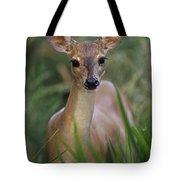 Marsh Deer Blastocerus Dichotomus Tote Bag