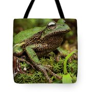 Marsupial Frog Gastrotheca Sp, A Newly Tote Bag