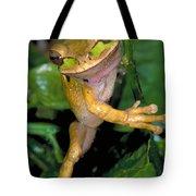 Masked Treefrog Tote Bag