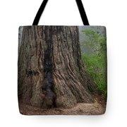 Massive Redwood And Fog Tote Bag